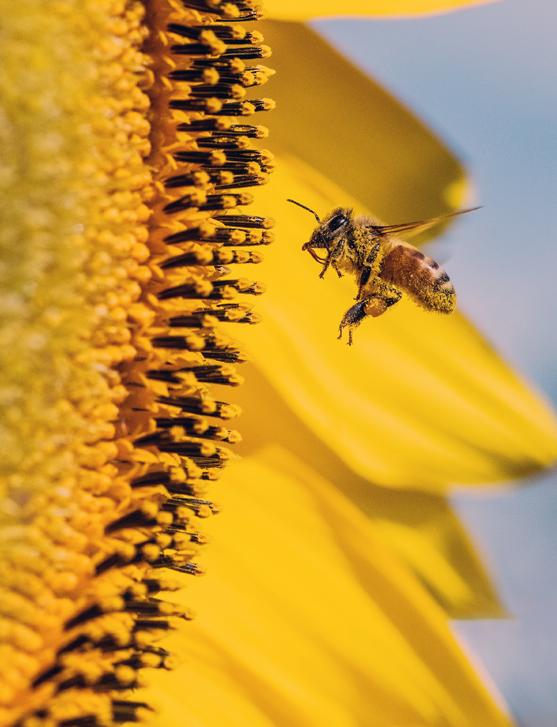 what are pollinators